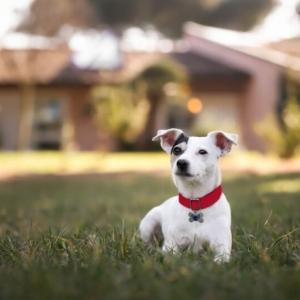 cane con medaglietta